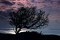 'Tree near Seatown, Dorset' - click here to see an enlargement of this landscape photograph